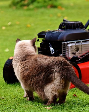 The Rise of Tech: Mowing Lawns Edition