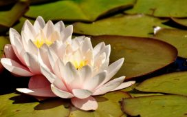 A Guide to Pond Plants