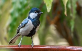 Attracting wildlife into even the smallest of gardens