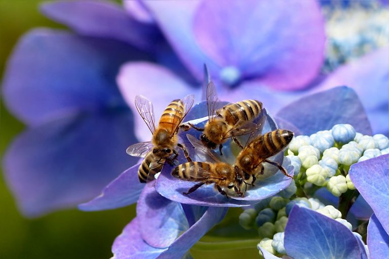 The perfect plants to grow to attract and thus protect bees